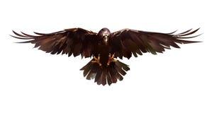 Painted покрасил ворон птицы в фронте на белой предпосылке Стоковое Изображение RF