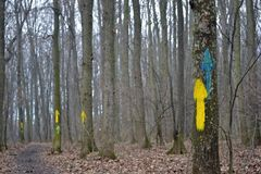 Painted arrows indicating the direction on the trees. In the forest royalty free stock photos