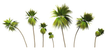 Painted Art Palm Trees on White Royalty Free Stock Photo