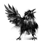 Painted baby crows on a white background. Art baby crows on a white background stock photos
