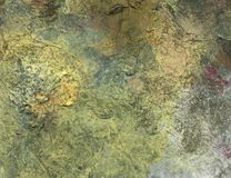 Painted background. An image with painted surface. Light green dominant color Stock Images