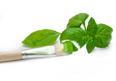 Painted basil Royalty Free Stock Photography