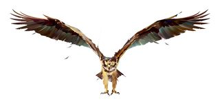 Painted bird osprey in flight on a white background stock photo