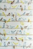 Painted birds and Clothespins. Different colors birds and wooden clothespins Royalty Free Stock Image
