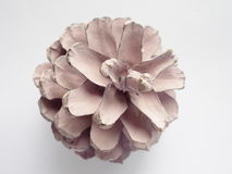 Painted blush color pine cone. On white background Royalty Free Stock Images