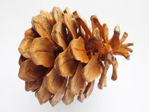 Painted brown color pine cone Royalty Free Stock Photo