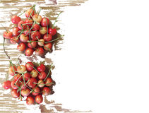 Painted cherries frame isolated on white. Luxurious watercolor red cherries frame isolated on white background Royalty Free Stock Image