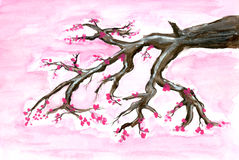 Painted cherry blossom Stock Photography