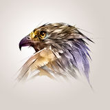 Painted color head of the bird hawk royalty free illustration