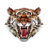 Painted color portrait of a tiger muzzle on a white background stock photo
