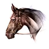 Painted colored of an animal horse side vector illustration