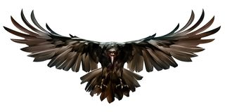 Painted colored bird in flight raven front vector illustration