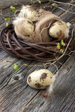 Painted Colorful Easter Eggs on wooden surface Royalty Free Stock Photography