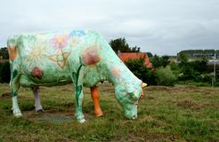 Painted cows in the meadow near Maassluis Royalty Free Stock Image