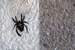 Painted cross spider Stock Photography