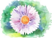 Painted daisy vector Stock Photos
