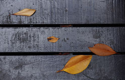 Painted dark wooden plank with foliage Royalty Free Stock Photography