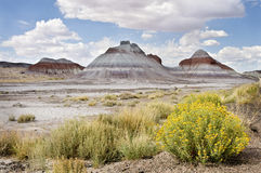 Painted desert, Arizona Royalty Free Stock Image