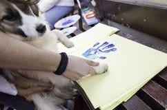 Painted Dog footprint. Footprint paper  dog, animal and adoption Stock Images