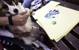 Painted Dog footprint. Footprint paper  dog, animal and adoption Royalty Free Stock Photography