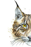 Painted drawing watercolor animal predator lynx Stock Photo