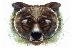 Painted drawing with watercolor portrait of an animal mammal of a brown bear on a white background. With splashes and divorces for a pattern, design and decor Royalty Free Stock Images