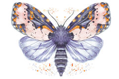 Painted drawing watercolor shaggy butterfly bear, bright color, thick body, night butterfly on a white background with splashes in Royalty Free Stock Images