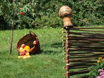 Earthenware jug hanging on a wicker fence en background of green grass and a basket of apples stock photos