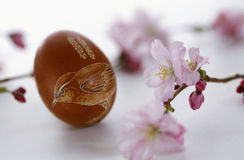 Painted Easter egg and cherry blossom Stock Photo