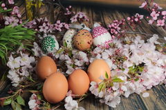 Painted Easter egg and grass with cherry branch Royalty Free Stock Photos