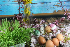 Painted Easter egg and grass with cherry branch Stock Images