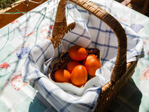 Painted Easter eggs in a basket Royalty Free Stock Image