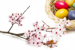 Painted easter eggs and blossoms Stock Image