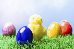Painted easter eggs and a chicken in grass, blue background. Various different color painted easter eggs and a yellow decoration chicken in grass, blue Royalty Free Stock Photos