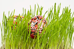 Painted easter eggs in fresh green grass Stock Images
