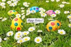 Painted Easter eggs in grass with flowering  daisies Royalty Free Stock Images