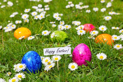 Painted Easter eggs in grass with white daisies Stock Photos