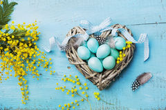 Painted Easter eggs in heart nest and mimosa flower on vintage blue background top view in flat lay style. royalty free stock image