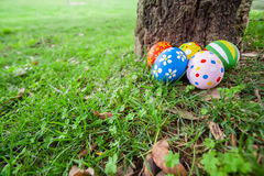 Painted Easter eggs hidden on the grass behind a tree trunk Stock Image