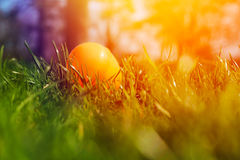 Painted Easter eggs hidden in the grass Stock Photos