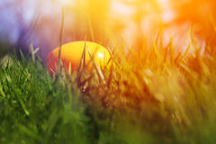 Painted Easter eggs hidden in the grass Stock Photo