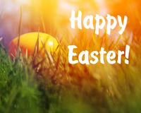 Painted Easter eggs hidden in the grass Royalty Free Stock Image