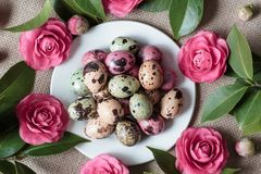 Painted easter eggs lying on white plate stock image