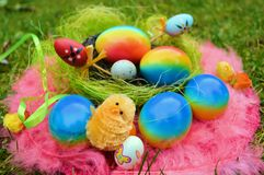 Painted easter eggs in nest Stock Images