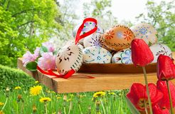 Painted Easter eggs. With tulips in the garden royalty free stock photos