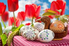 Painted Easter eggs. With tulips in the garden stock photos