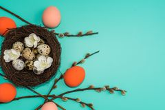 Painted eggs and quail eggs in a nest with willow branches on a turquoise background stock photo