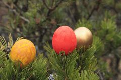 Painted eggs in a tree. Stock Photos