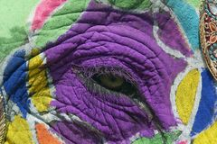 Free Painted Elephant Eye Stock Photography - 4678802