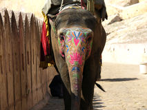 Painted elephant Stock Images
